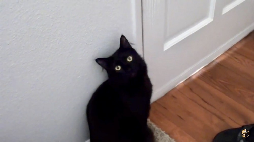 猫あるある!自ら「猫狂い」と称する飼い主が挙げる、「猫狂い」の飼い主の行動10個!