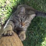 いたずら好きの甘えん坊でもほかの猫が『憎めないヤツ』と許してしまう4番目の猫。彼がたどり着いた居心地のいい場所