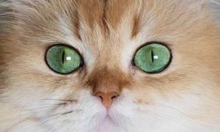 猫たちの一日を追う!もふもふのふたりの幸福な日常♪