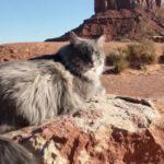 猫ちゃんと海外旅行!西部劇のロケ地で気分は主人公!?アーチーズ国立公園、モニュメントバレーの絶景を巡ります!