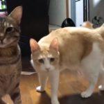 猫ちゃんたちが帰宅をお出迎え!すぐに集まってくれる猫ちゃんたちがとっても可愛い!