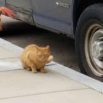 3年前から見かけるようになった路上で暮らす野良猫。根っからの野良猫だと思っていたらある日庭に現れて・・・