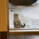 とても寒い雪の日の夕方。中に入りたそうに消防署を覗き込んでいた小さな野良猫が見つけた家