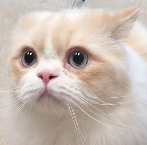 私が仕事に出かけるとき、玄関でスタンバイしている私の猫は思い切り哀しそうな瞳で訴える・・・