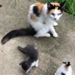過酷な外の暮らしから子猫達を救おうとする母猫の愛。到着した救助者を我が子のところまで連れて行った野良猫