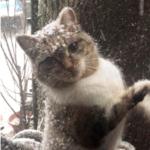 1年前の冬、子猫を連れた野良猫を助けたカップルのもとへ数日前の吹雪の日に姿を消した母猫が帰ってきた