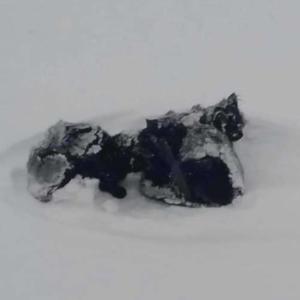 吹雪の中ミルクを運ぶトラック運転手が見つけた雪原の中の黒い点。車から投げ捨てられていた3匹の子猫
