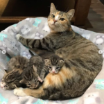 民家の敷地に積み上げられた薪の山で発見された母猫と3匹の子猫。真冬の寒さにも拘らず元気に育っていた子猫たち