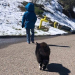 小さな娘を守る猫。野性が強く残り、シェルターでの引き取りができないと言われた2匹の子猫