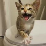 ペットを探し始めた私に養育ボランティアをしている同僚から電話が入った『子猫がいるんだけど会ってみない?』