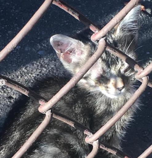ケガをした子猫の世話を始めたばかりの私たちに親切な隣人から両目の塞がった小さな子猫を保護したと連絡が入った