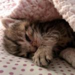 「2015年4月26日、私たちはここでペニーを見つけました。」玄関先の地面で死んだように動かなかった子猫