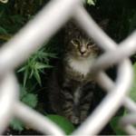 近所の空き地に姿を見せるようになったひとりぼっちの小さな野良猫を放っておけなくて・・・