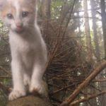 森で遊ぶ子猫たち♡木登りは楽しいにゃ♡
