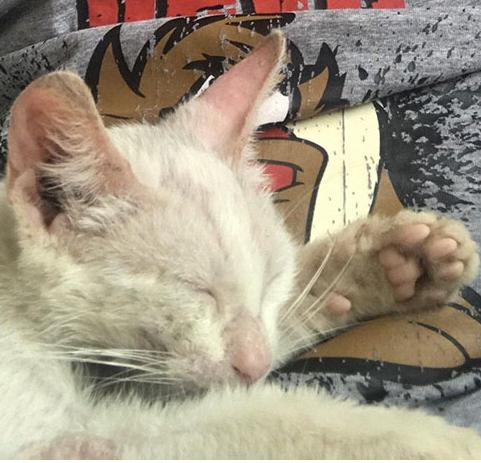いつの間にか眠ってしまった昼寝から目が覚めたら・・・お腹の上で知らない小さな子猫が昼寝をしていた