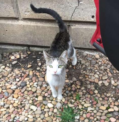 父が可愛がっていた隣人の猫は、犬を飼い始めた飼い主に家の外に追い出されてしまった・・・