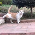 父と庭の猫たちのいつもの風景。帰宅した父の後をどこまでも付いて行く猫たち