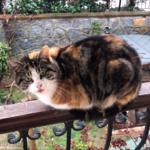 バルコニーは庭のプリンセスの秘密のラウンジ。彼女にごちそうのおかわりを持って来たら・・・