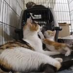 3匹の子猫を出産した若い野良猫を助けたい・・・安全な場所で子育てを終えた野良猫たちの数か月後