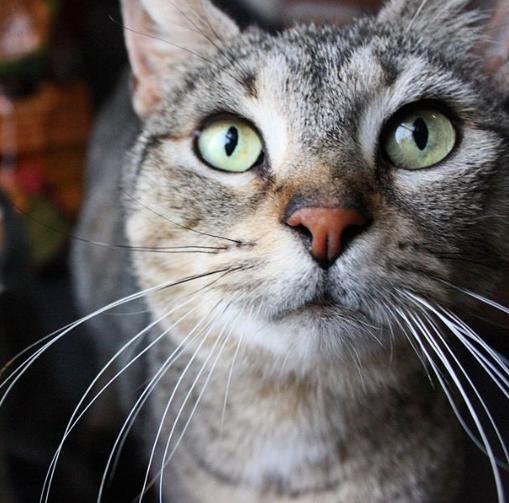 野良猫のお世話をしていたら野良猫が家の中に入ってきて一晩過ごして行った。再び現れた野良猫はママになった・・・