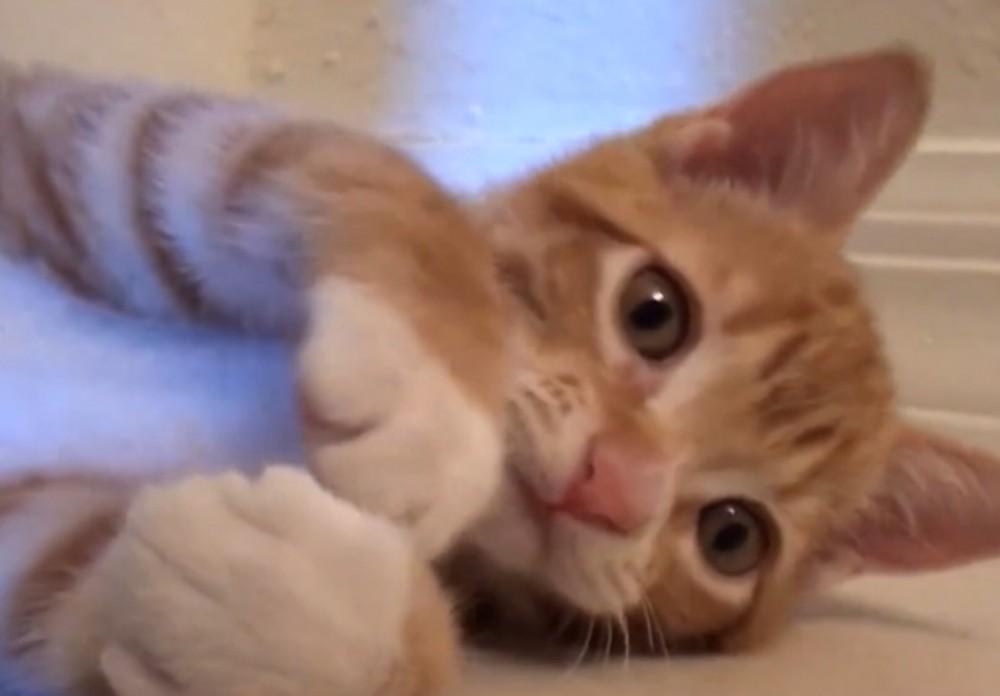 「あなたが大好きだにゃ♡♡♡」!猫からの愛の言葉!猫の愛情表現13個!