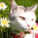 「幻の白いタンポポ」を探して…!猫ちゃん、春の大冒険!