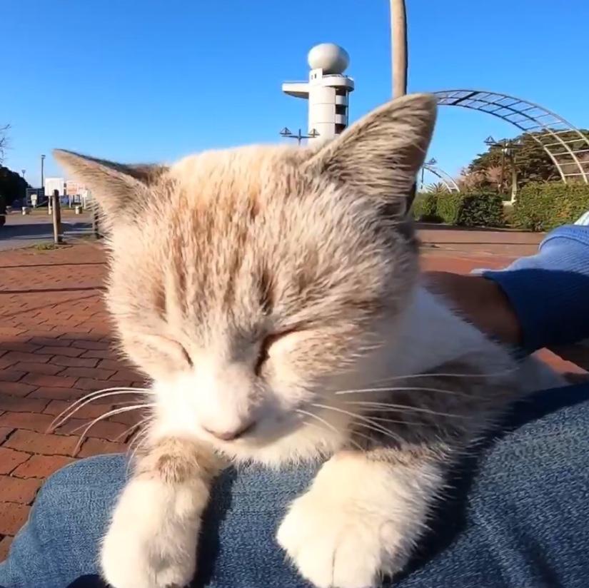 癒し動画♪野良猫さんがトコトコとやってきて、ナデナデさせてくれた♡