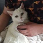 置き去りになって近所の庭の段ボール箱で暮らしていた猫。優しい人との出会いが人生を変えた