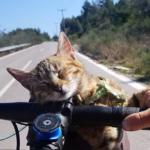 ゴツゴツの坂道で音楽が途切れたとき、自転車を追って鳴きながら走って来る小さな子猫の叫び声に気付いた