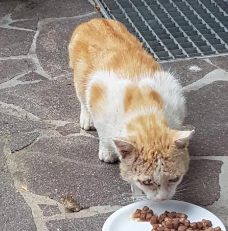 冬のある日愛猫を亡くしたカップルは、庭に現れる近所の野良猫たちに食べものを与え始めた・・・