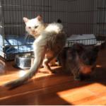 今もボランティアの心に生き続けるギリシャの通りで別々に保護された2匹の野良猫