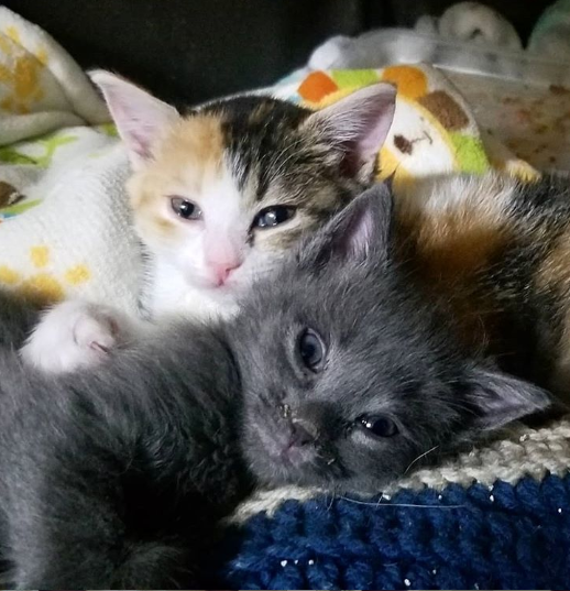 それぞれひとりぼっちだった2匹の子猫が獣医さんの家で出会って一緒に永遠の家へ旅立つまで