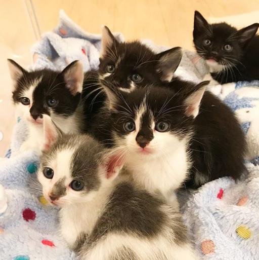 母猫の亡骸の傍で身を寄せ合っていた5匹の子猫。養育ボランティアの家でも何をするにもいつも一緒に