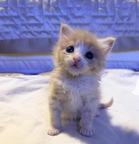 シェルターで安楽死の期限が迫るひとりぼっちで見つかった感染症に苦しむ子猫