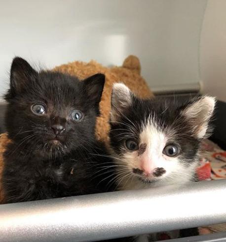 通りがかりの人が子猫の叫び声をたどって行くと・・・ゴミ捨て場の近くに座り込んでいた2匹の子猫