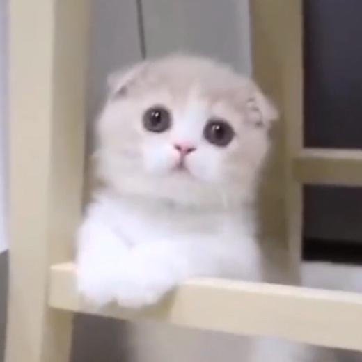 ふわもふの天使たちに癒される♡キュートな子猫たちの映像集♡