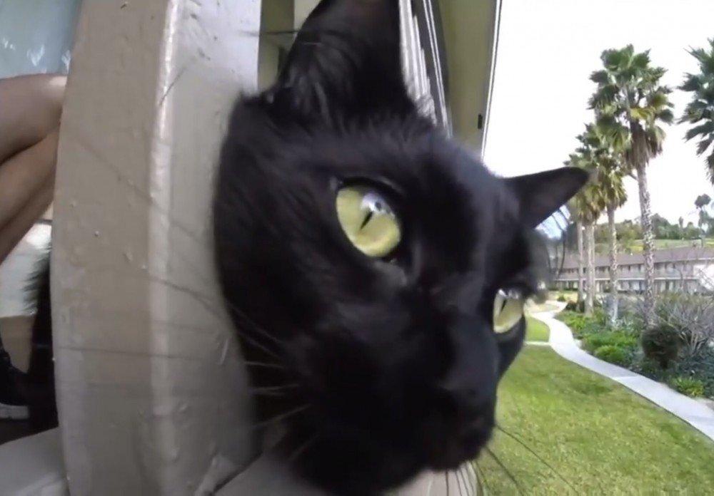 「お外に出たいにゃ」!ドアを開けようとする猫!〜猫のコールはお散歩が大好き〜