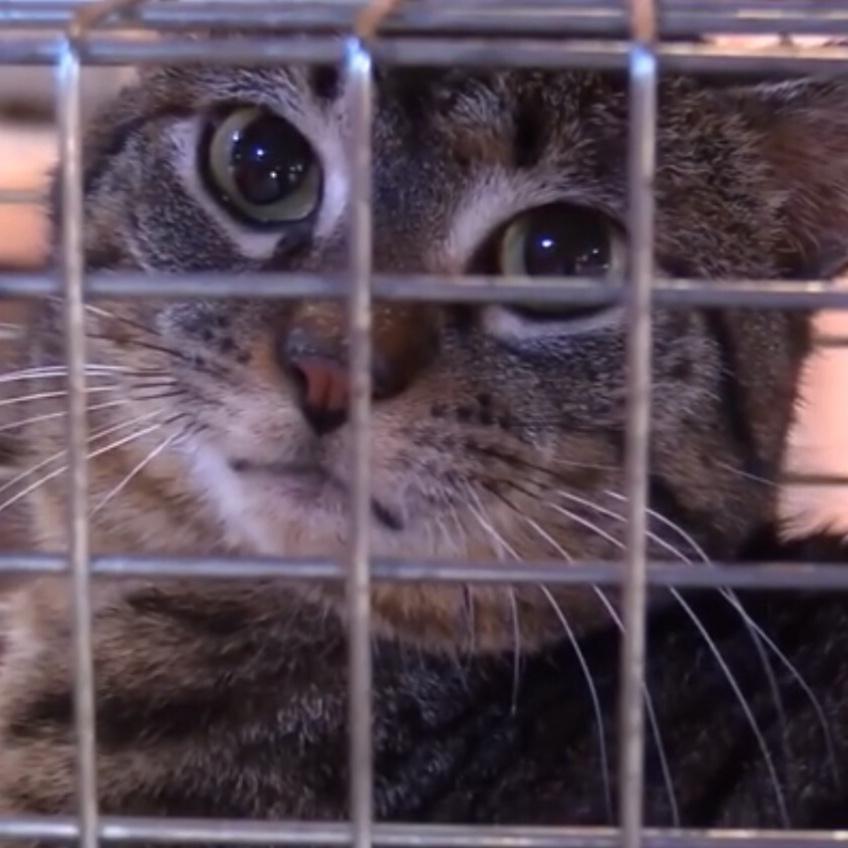 数十匹の猫・子猫を、劣悪な環境から救助!猫・子猫のレスキュー映像!