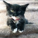 路上で保護された目を閉じることができない子猫。新しい家で大好きな先住猫に命を救われて・・・