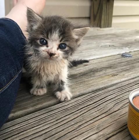 昨日の夕方、家の外にいたボーイフレンドに駆け寄ってきた小さな子猫と全速力で後を追ってきた子猫
