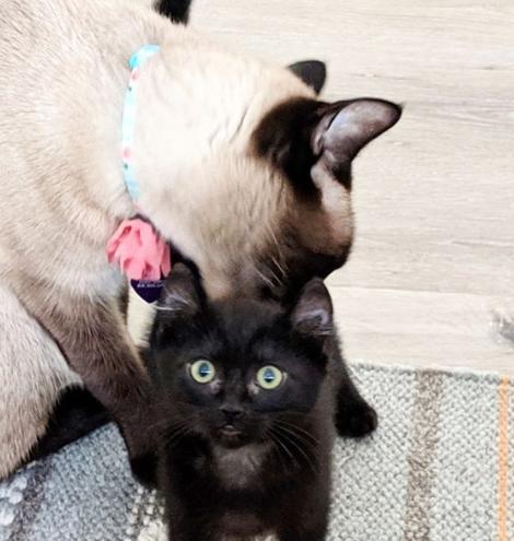 先住猫と仲良くなりたくて猛アピール!シェルターのケージの隅で怯えていた小さな子猫
