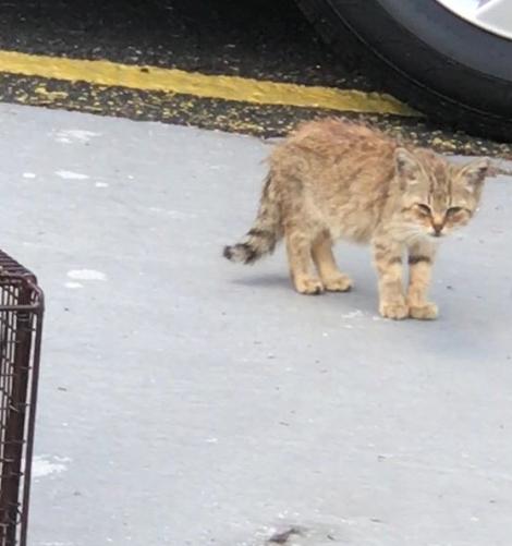 たくさんの人に見過ごされ歩道でうずくまって誰かの助けと愛情を待っていた子猫