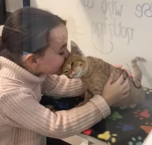 シェルターに猫を探しに来た少女と新しい家族との出会いを待っていた人懐っこい子猫