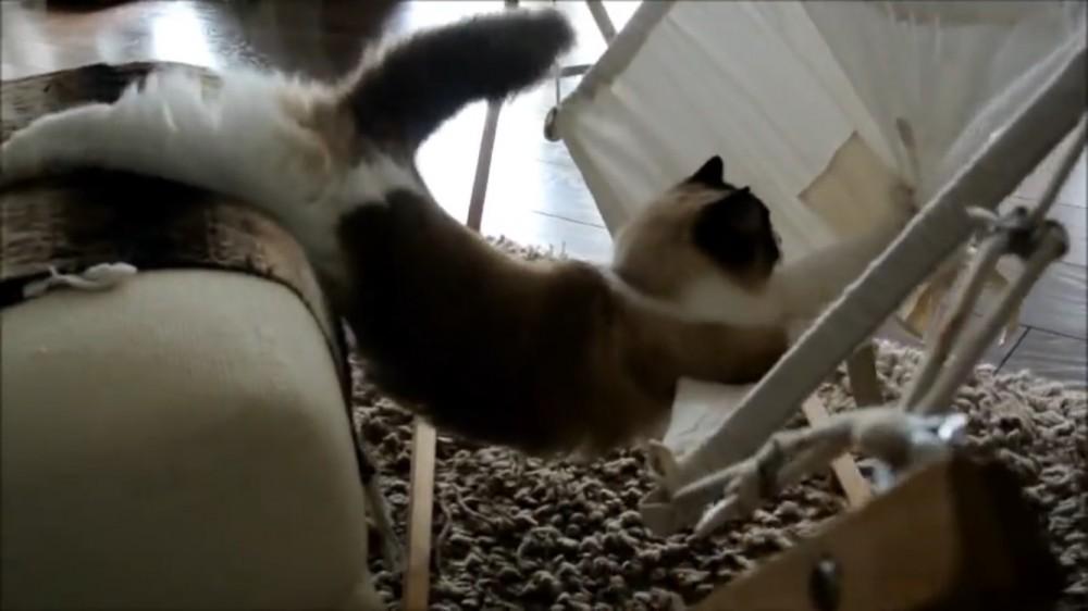 ハンモックと格闘する猫!〜ティモのハンモック練習日記〜
