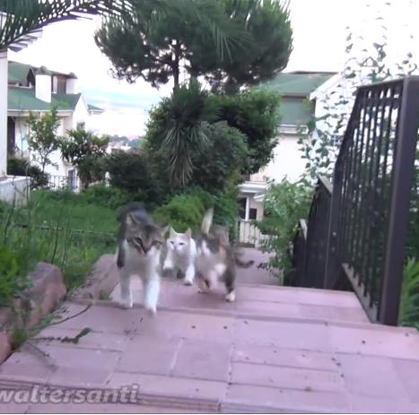 庭の遠くにいる猫たちを一瞬で集める簡単な方法。猫たちは絶対に聞き逃したりしない・・・