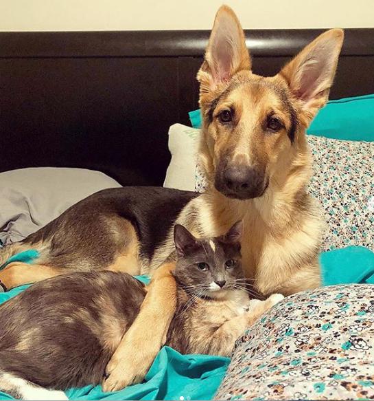 生後1か月の子犬が新しく家族に迎えられた家で出会った面倒見のいい猫のお姉さん