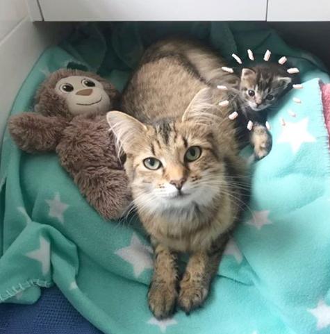 4匹の子猫を出産しそのうちの3匹を次々に亡くした母猫が生き残った子猫を抱きしめて・・・