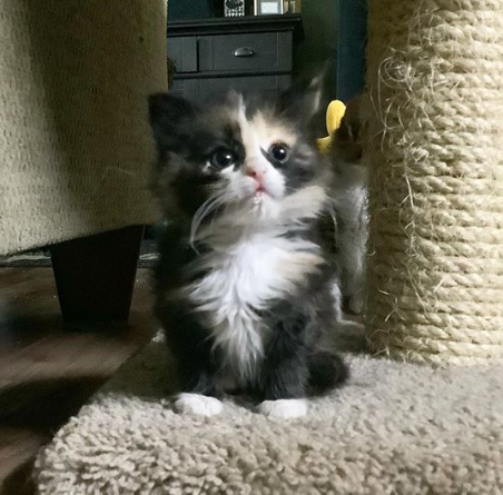 生後1日で獣医師のもとへやって来た、生まれたとき母猫に見捨てられた弱々しい子猫の1か月後