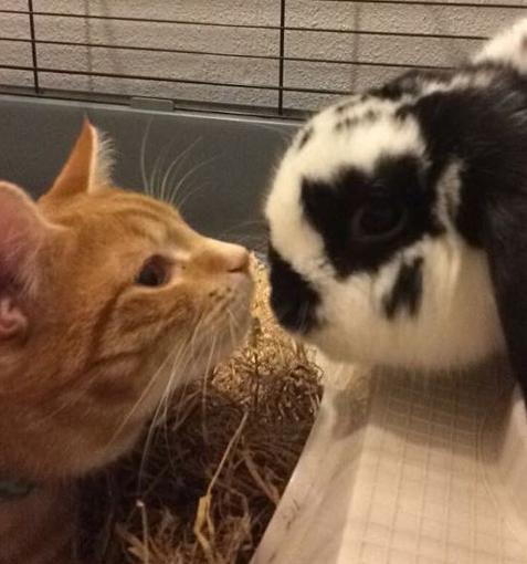 すべての始まりは、先輩ウサギのケージの中にウサギ用の小さな家を見つけた子猫が興味津々・・・