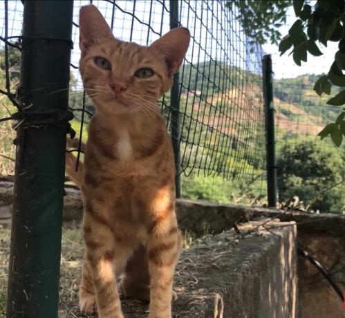 もうひとつの庭には、怪我から回復して毎日通ってくるようになった野良猫がいる